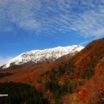 大山秋色週間と紅葉の見ごろについて
