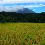 久々に顔を覗かせた大山と黄金色に実った稲