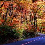大山一の沢から三の沢付近、紅葉が見頃!