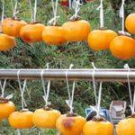 今年も庭の柿が大豊作!