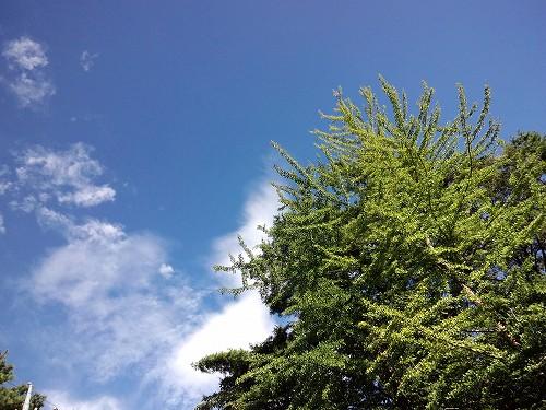青空とイチョウ