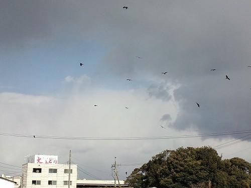 鷹・鷲がカラスを追い回す