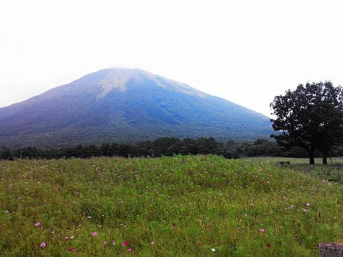 大山と秋桜(コスモス)