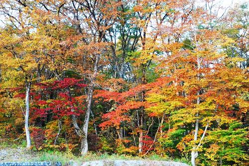 紅葉の大山