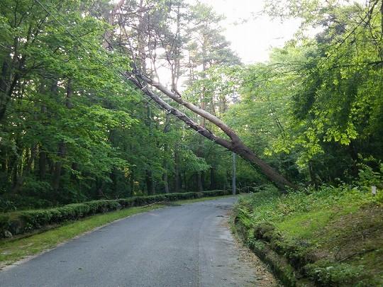 暴風による倒木