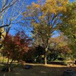 大山あけまの森ペンション村は紅葉が見頃!